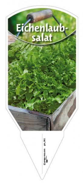 Eichenlaubsalat grün