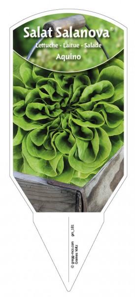 "Salat Salanova ""Aquino"""
