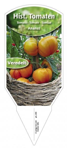 Tomaten, Historische Ananas veredelt