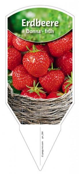 """Erdbeere """"Donna"""""""