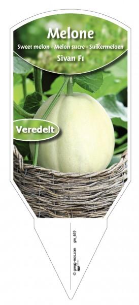 Melone Sivan F1 veredelt