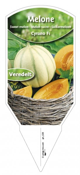 Melone Cyrano F1 veredelt