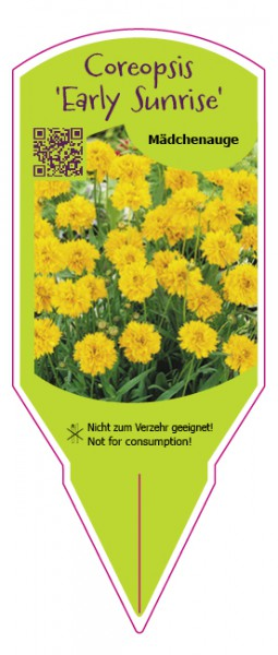 "Coreopsis grandiflora ""Early Sunrise"""