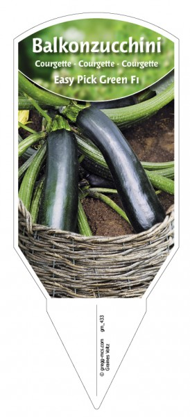 Balkon-Zucchini 'Easy Pick Green F1'