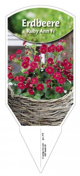 Erdbeere 'Ruby Ann F1'