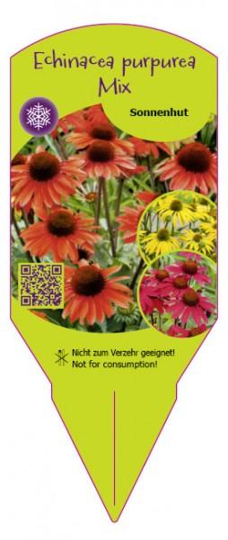 Echinacea purpurea Mix - Sonnenhut