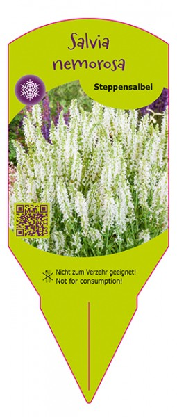Salvia nemorosa weiß