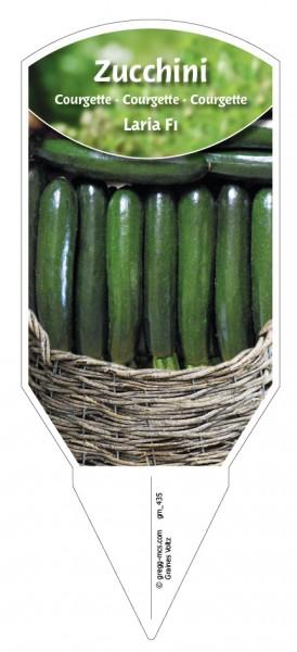 Zucchini 'Laria F1'