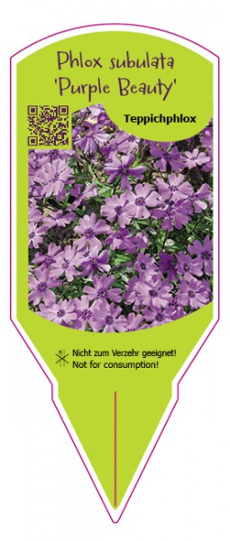 "Phlox subulata ""Purple Beauty"""