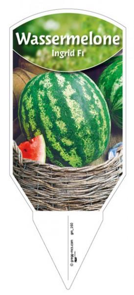 Melone 'Ingrid F1'