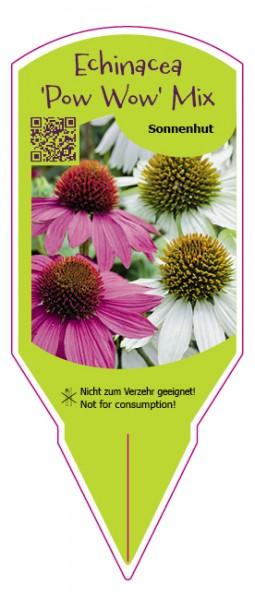 "Echinacea purpurea ""Pow Wow"" Mix"