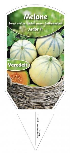 Melone Ardor F1 veredelt