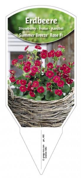 Erdbeere 'Summer Breeze® Rose F1'