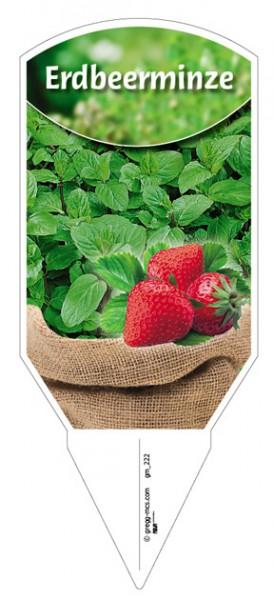 Erdbeerminze
