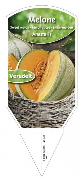 Melone Anasta F1 veredelt