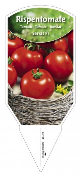 Tomaten, Rispen- 'Serrat F1'