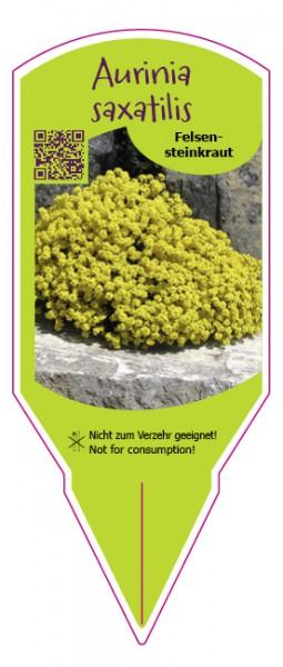 Aurinia saxatilis (Alyssum)