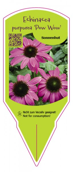 "Echinacea purpurea ""Pow Wow"""