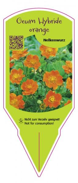 Geum hybride orange