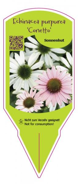 """Echinacea purpurea """"Conetto"""" Mix"""