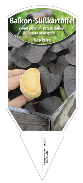 Balkon-Süßkartoffel Kaukura