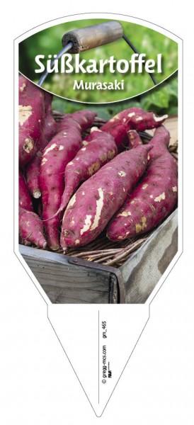 Süßkartoffel 'Murasaki'