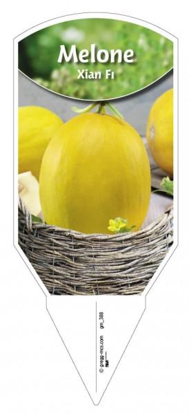 Melone 'Xian F1'