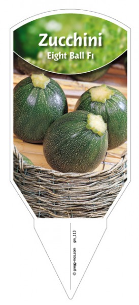 "Zucchini ""Eight Ball F1"""