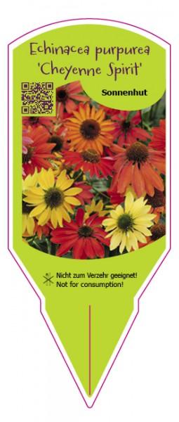 """Echinacea purpurea """"Cheyenne Spirit"""""""