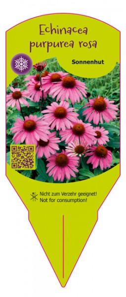 Echinacea purpurea rosa