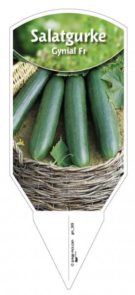 Salatgurke 'Gynial F1'