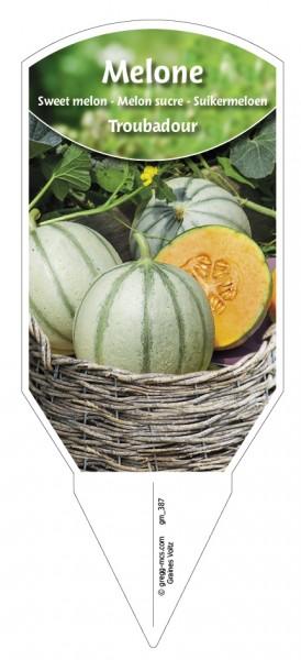 Melone 'Troubadour'