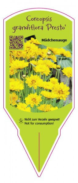 Coreopsis grandiflora Presto