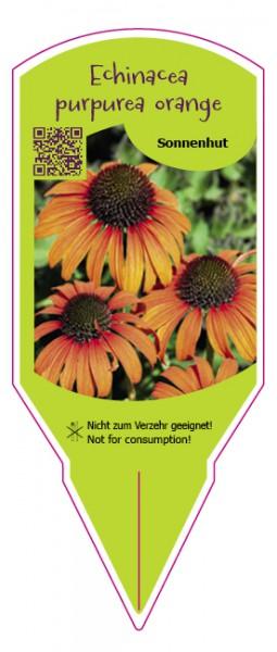 Echinacea orange