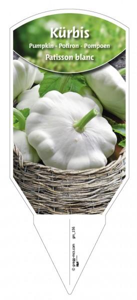 Kürbis 'Patisson blanc'
