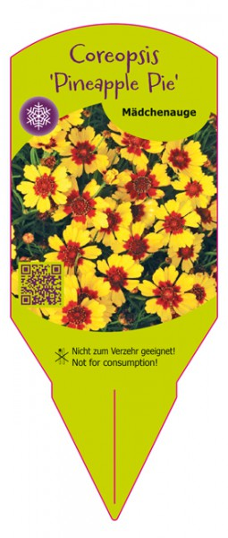 Coreopsis Pineapple Pie
