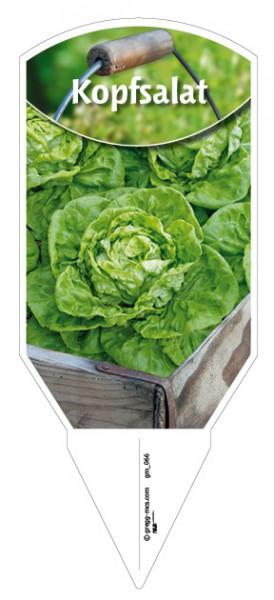 Kopfsalat grün