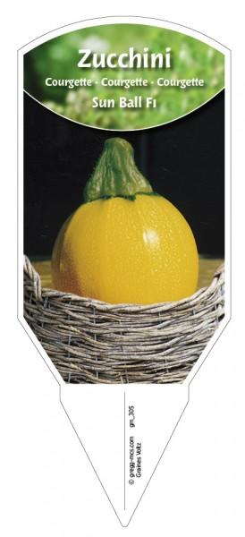 Zucchini 'Sun Ball F1'