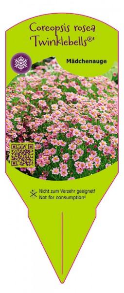 Coreopsis rosea 'Twinklebells®'