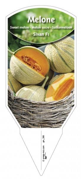 Melone 'Sivan F1'