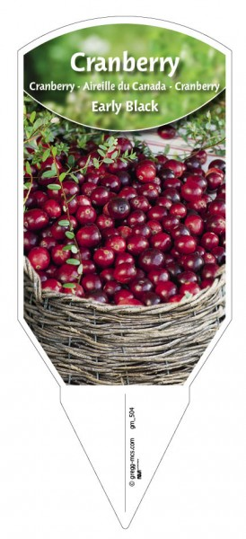 Cranberry 'Early Black'