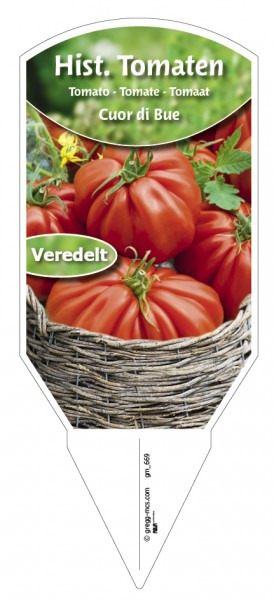 Tomaten, Historische Cuor di Bue (Ochsenherz) veredelt