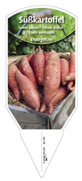 Süßkartoffel 'Evangeline'