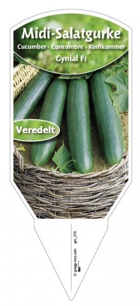 Salatgurke 'Gynial F1' veredelt