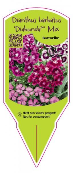 Dianthus barbatus Diabunda Mix