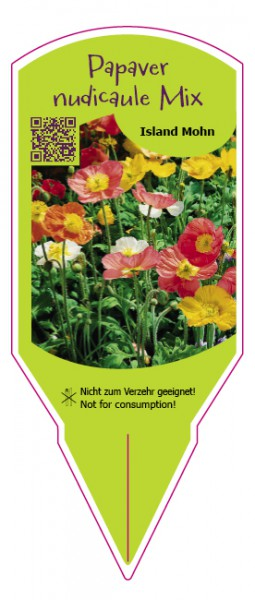 Papaver nudicaule Mix