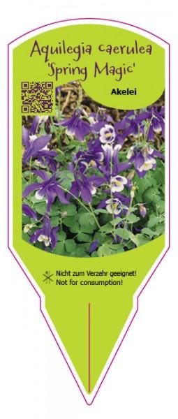 """Aquilegia caerulea """"Spring Magic"""""""