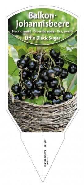 Balkon-Johannisbeere 'Little Black Sugar' schwarz
