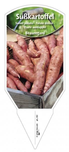 Süßkartoffel 'Beauregard'