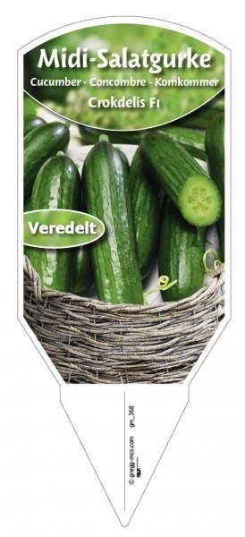 Midi-Salatgurke 'Crokdelis F1' veredelt